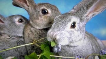 Узнаем чем и как кормят кроликов в домашних условиях