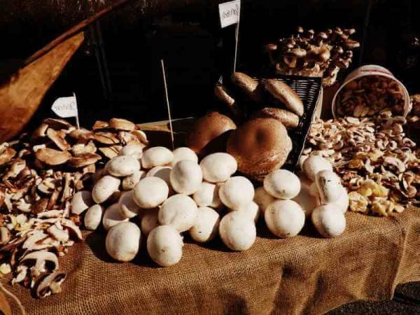 Съедобные грибы Крыма
