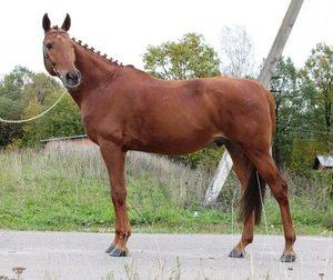 Клички для лошади: как оригинально назвать лошадь