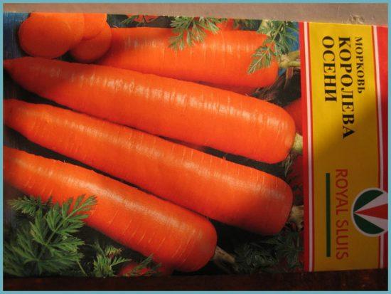 Морковь: особенности выращивания в открытом грунте