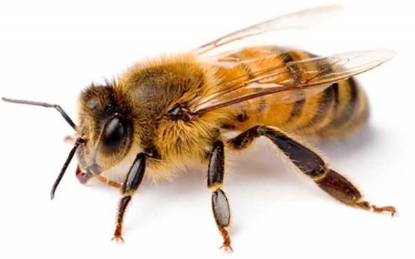 Термообработка семей пчёл