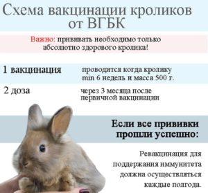 Когда и какие прививки делать кроликам