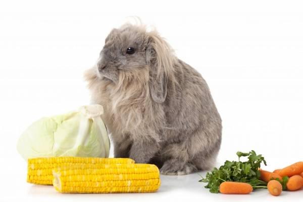 Можно ли кроликам кукурузу: разные виды корма из кукурузы