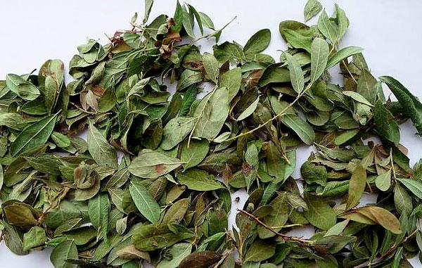 Как связаны между собой лечебные свойства и противопоказания листьев брусники