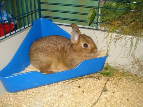 Пахнут ли декоративные кролики