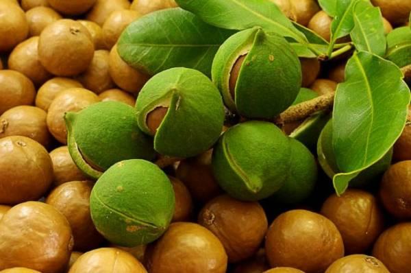 Королевский орех Макадамия и его полезные свойства, о которых вы могли не знать