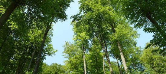 Изучаем лиственные деревья России