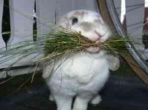 Новые технологии выращивания кроликов
