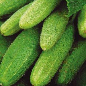Какие семена огурцов самые лучшие для открытого грунта: секреты успешного огородничества