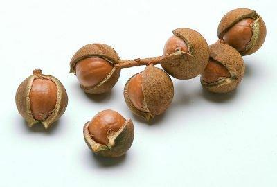 Выращивание ореха Макадамия