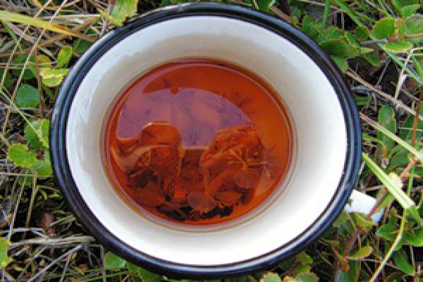 Польза Иван чая для женщин: лечебные свойства, сфера применения и правила употребления