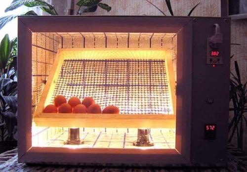 Переворот яиц в инкубаторе: советы птицеводов