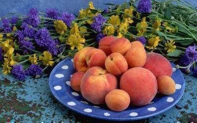 Основные отличия персика и абрикоса