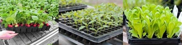 Кассетные емкости для выращивания рассады овощных и цветочных культур