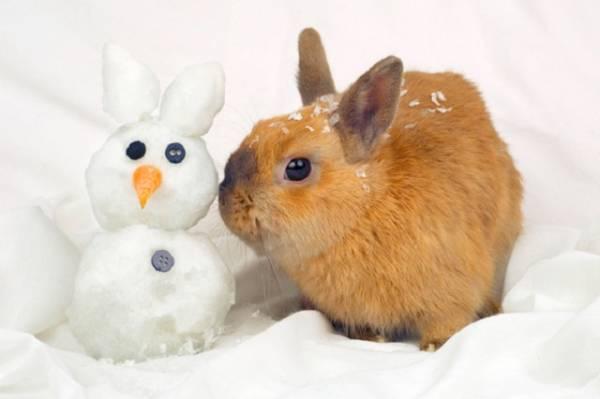 Чем поить кроликов зимой, если вода в поилках замерзает