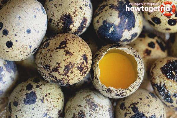 Скорлупа перепелиных яиц - польза и вред