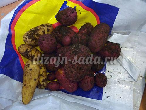 Чем лечить паршу картофеля