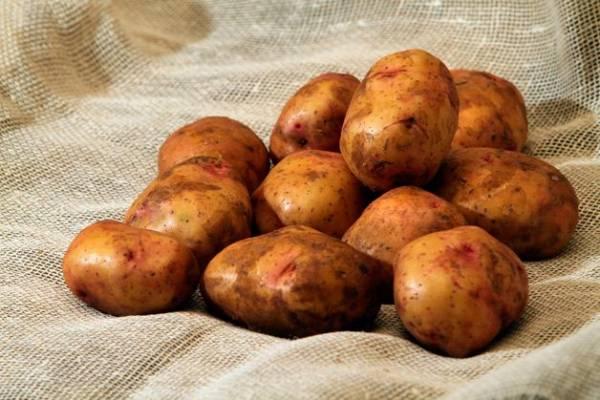 Какая температура и влажность нужна для хранения картофеля
