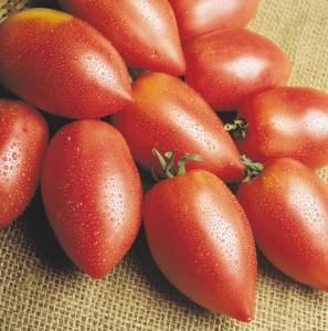 Самые урожайные помидоры для Сибири для открытого грунта