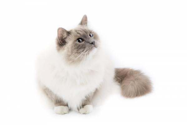 Инструкция по применению АСД фракция 2 для кошек