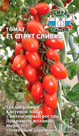 Помидорное «дерево» на грядках – урожайный гибрид Спрут