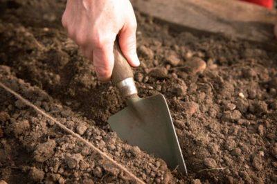 Современная технология возделывания сахарной свеклы от посева до уборки и хранения урожая