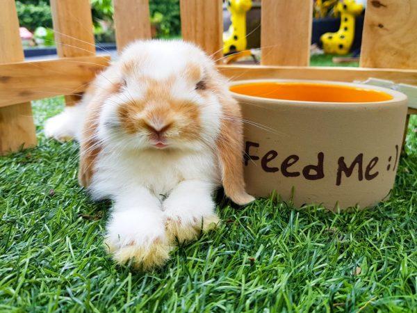 Чем лучше всего кормить кроликов