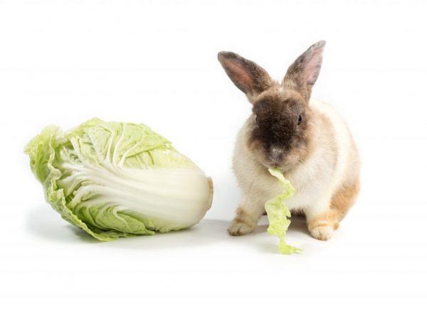 Капуста в рационе кроликов
