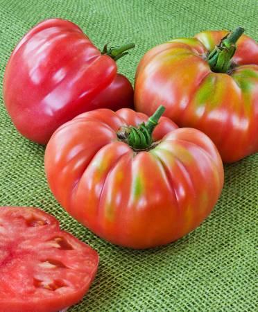 Самые урожайные семена томатов сибирской селекции