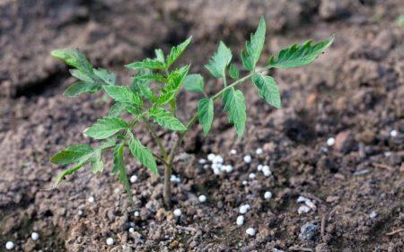 Применение для подкормки растений удобрение суперфосфат