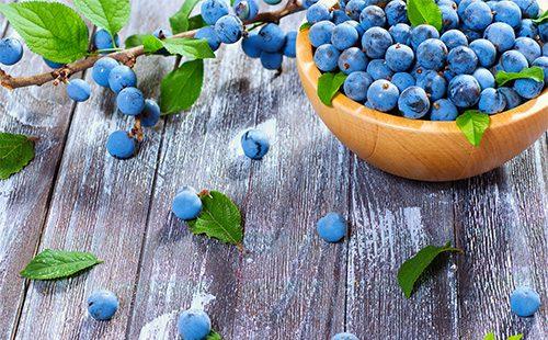 Полезные свойства терна в народной медицине, использование листьев, цветов, коры и корней