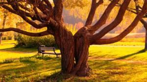 Сколько лет живут берёза, дуб и липа
