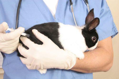 Всё о вакцинации кроликов