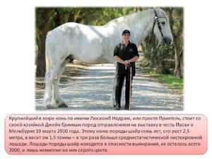 Выбор подходящей и оригинальной клички для лошади
