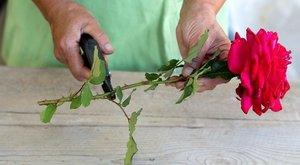 Как сохранить черенки роз до весны в домашних условиях